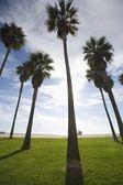 ビーチで背の高いヤシの木 — ストック写真