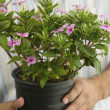 Man Holding Potted Plant — Stock Photo