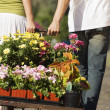 Young couple pulling cart with potted flowers — Stock Photo #33806847