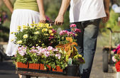 Young couple pulling cart with potted flowers — Stock Photo