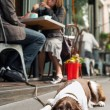 Dog lying on sidewalk outside cafe — Stock Photo