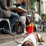 Dog lying on sidewalk outside cafe — Stock Photo