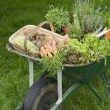 Wheelbarrow Full of Vegetables — Stock Photo #33826599
