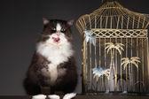 Cat by Empty Birdcage — Stock Photo