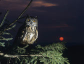Owl Perching on Tree Branch — Stock Photo