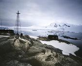Penguins at Settlement — Stock Photo