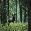 Stock Photo: Elk in Forest