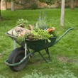 Wheelbarrow Full of Vegetables — Stock Photo #33837717