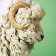 Ram on green background — Stock Photo