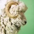 Ram on green background — Stock Photo #33837767