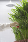 Scientist conducting test on plants — Stock Photo