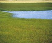 Marsh Grass and Blue Water — Stock Photo
