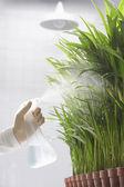 Scientist spraying plants — Stock Photo