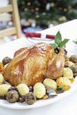 Christmas Turkey — Stock Photo