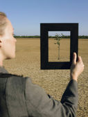 Businesswoman framing tree — Stock Photo
