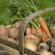 Stock Photo: Basket of Vegetables