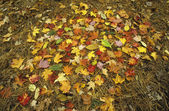 Pile of autumn leaves — Stock Photo