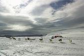 Dogs near trailer — Stock Photo