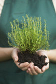 Woman Holding Herb Plant in Potting Soil — Foto de Stock