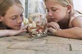 Girls looking at shells in jar — Stock Photo