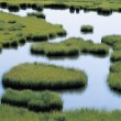 Stock Photo: Pond in Grassland