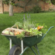 Wheelbarrow Full of Vegetables — Stock Photo #33850307