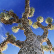 Prickly tree — Stock Photo #33858701