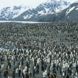 Large colony of Penguins — Stock Photo #33859915