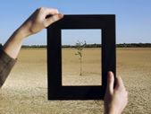 Woman framing tree in desert — Stock Photo