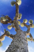 Prickly tree — Stock Photo