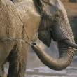 Stok fotoğraf: AfricElephant bathing at waterhole