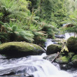 Stock Photo: Stream in rainforest