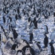 Stock Photo: Penguins gathering on ice