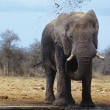 AfricElephant squirting mud — Stock Photo #33864805