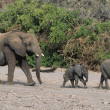 Three AfricElephants — Stock Photo #33868845