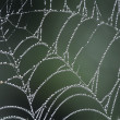 Dew covered spiders web — Stock Photo