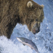 Grizzly bear swimming with fish — Stock Photo #33870995