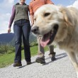 Couple walking with golden retriever — Stock Photo #33878027