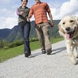 Couple walking with golden retriever — Stock Photo #33879437