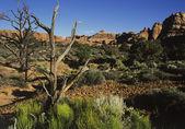 Vegetation in rocky landscape — Stock Photo