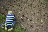 Boy planting crops — Stock Photo