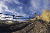 Mountain Biking on Dirt Track — Stock Photo
