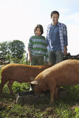 Father and Son Feeding Pigs — Stock Photo