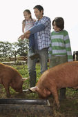 Family Feeding Pigs — Stock Photo