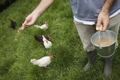 Man feeding hens in garden — Stock Photo