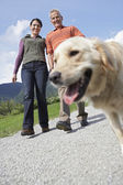 Couple walking with golden retriever — Stock Photo
