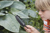 Boy Examining Plant with Magnifying Glass — Stock Photo