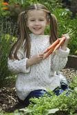 Girl Picking Carrots — Stock Photo