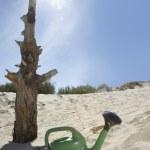 Watering can near dead tree trunk — Stock Photo