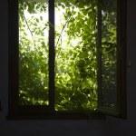 Shrubbery behind window — Stock Photo #33887685